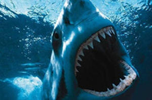 First 'Piranha 3D', and Now 'Shark Night 3D'!