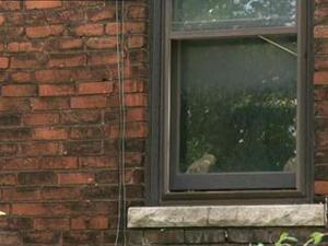 Searching For Sugar Man: Window (Uk)