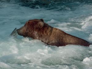 Bears: Fishing Fails