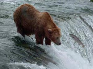 Exclusive: Bears - Fishing Fails