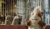 Mice and Hurley in