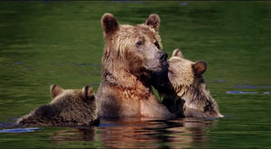 5 Ways 'Bears' Is the Perfect Nature Doc for Kids