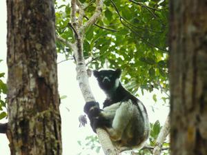 Island Of Lemurs: Madagascar