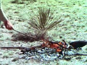 The Cowboy (Trailer 1)