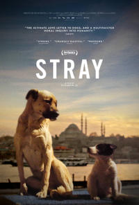 Stray (2021) Movie Poster