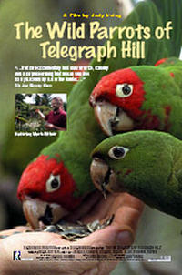 The Wild Parrots of Telegraph Hill Movie Poster