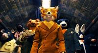 Mr. Fox and Friends in
