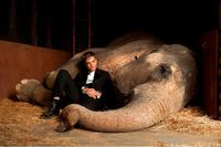 Robert Pattinson as Jacob and Rosie the elephant in
