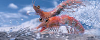 Will The Krill voiced by Brad Pitt and Bill The Krill voiced by Matt Damon in