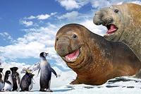 Mumble (voice of Elijah Wood), Lovelace (voice of Robin Williams) and the Amigos meet the Elephant seals in