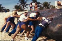 The brave and resourceful men and women of the Reno Sheriff's Department, on special assignment in Miami, put their all into dealing with a beached whale in