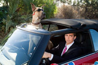 """Marmaduke (voice of Owen Wilson) and Lee Pace as Phil in """"Marmaduke."""""""