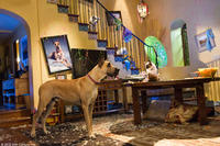 """Marmaduke (voice of Owen Wilson) and Carlos (voice of George Lopez) in """"Marmaduke."""""""