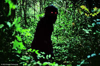 A scene from ``Uncle Boonmee Who Can Recall His Past Lives.''