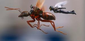 'Ant-Man and the Wasp' Microscopic Quiz