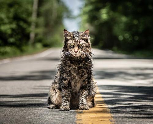 Pet Sematary (2019) Times - Movie Tickets