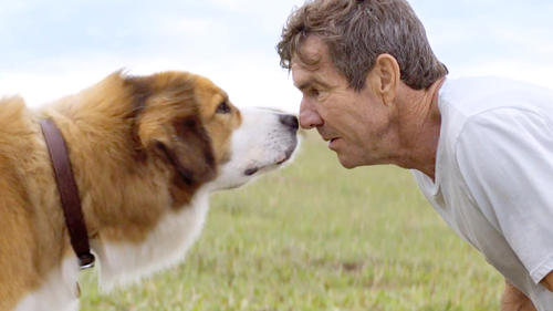 A Dog's Purpose: Trailer 1
