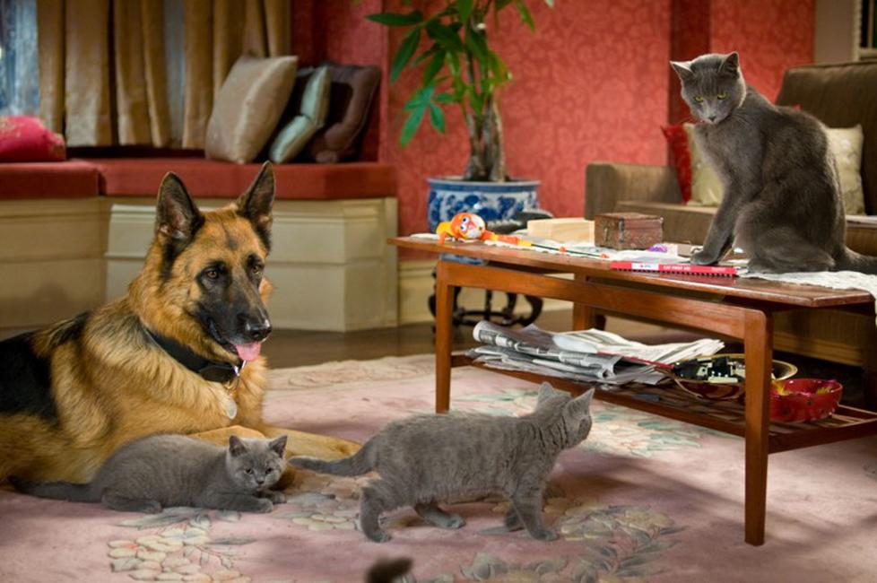 Cats & Dogs: The Revenge of Kitty Galore 3D (2010) Movie ...