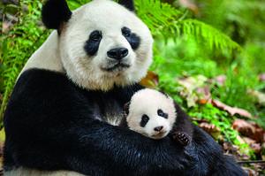 Exclusive: John Krasinski Talks Disneynature's 'Born in China' and Baby Pandas