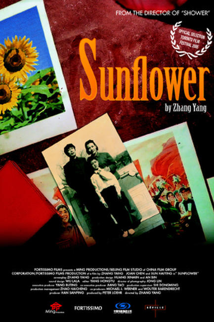 Sunflower Photos + Posters