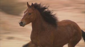 "A scene from ""Wild Horse, Wild Ride."""