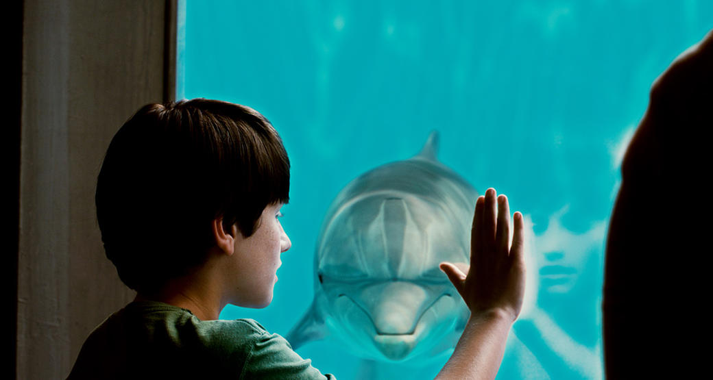 Dolphin Tale 3D Photos + Posters