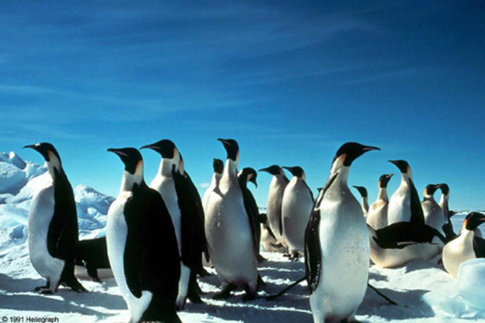 Antarctica (1991) Photos + Posters