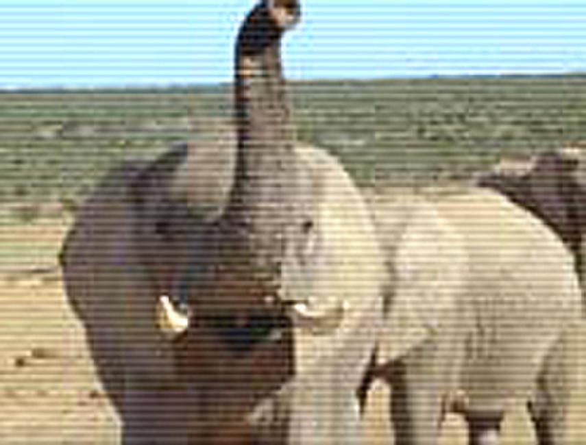 Wild Safari 3D: A South African Adventure Photos + Posters