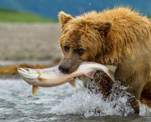 "A scene from ""Bears."""