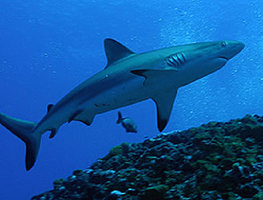 Sharks 3D Photos + Posters