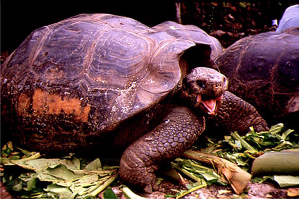 Galapagos 3D (1999) Photos + Posters