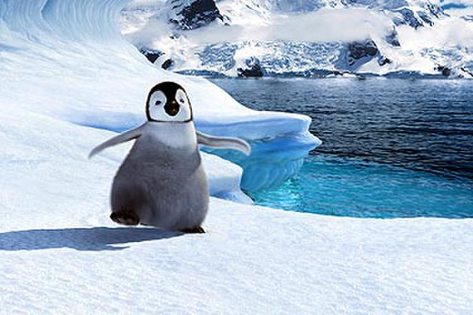 Happy Feet Photos + Posters
