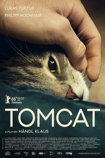 Tomcat Photos + Posters