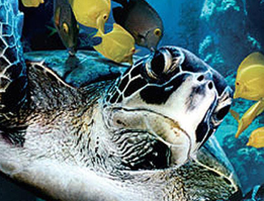 Deep Sea 3D Photos + Posters