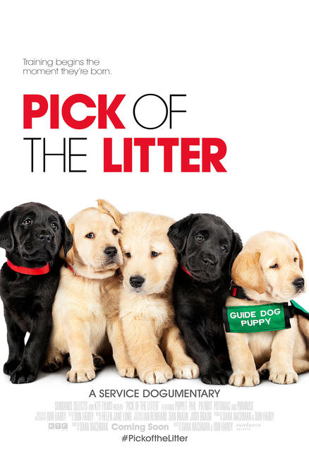 Pick of the Litter Photos + Posters