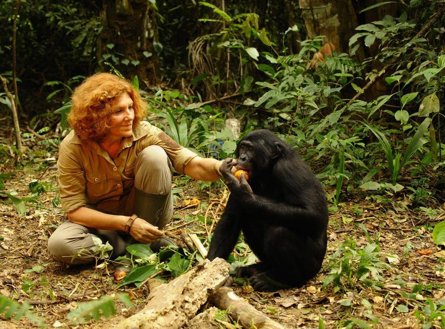 Bonobos: Back To The Wild Photos + Posters