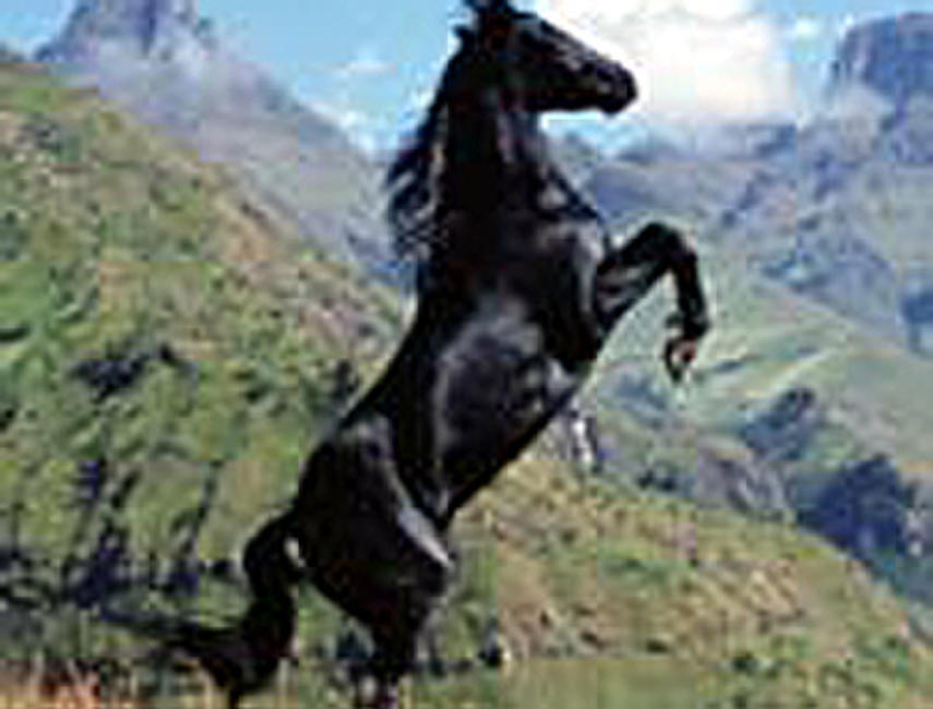The Young Black Stallion IMAX Photos + Posters