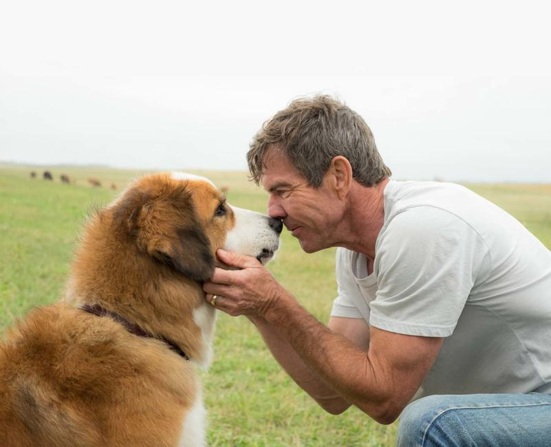 A Dog's Purpose Photos + Posters