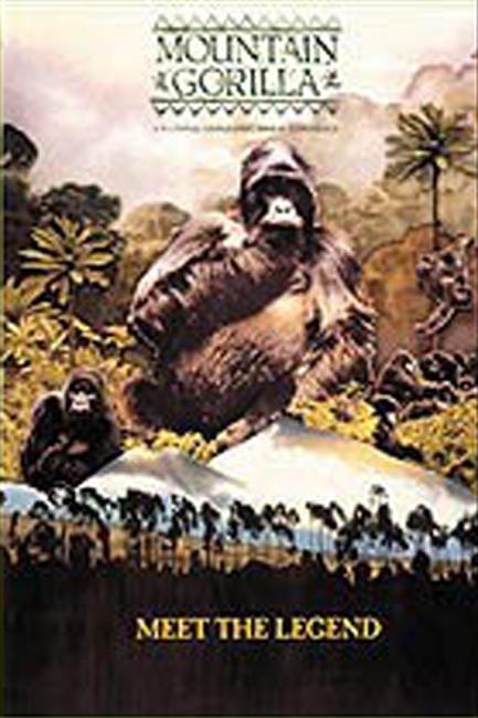 Mountain Gorilla Photos + Posters