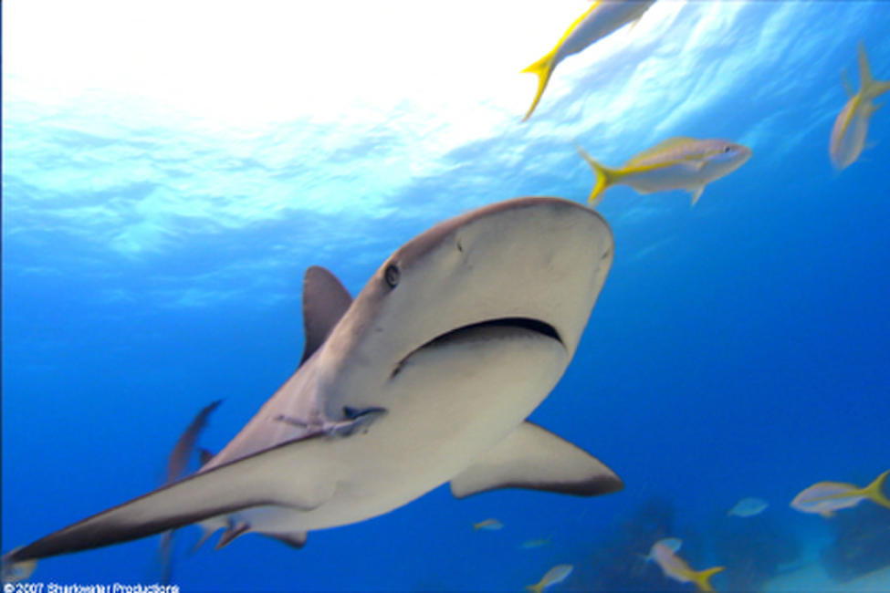 Sharkwater Photos + Posters