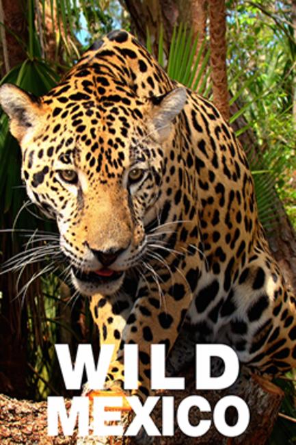 Wild Mexico Photos + Posters