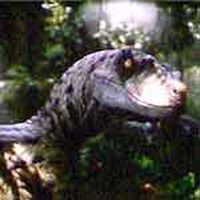 Jurassic Park III - DLP Photos + Posters