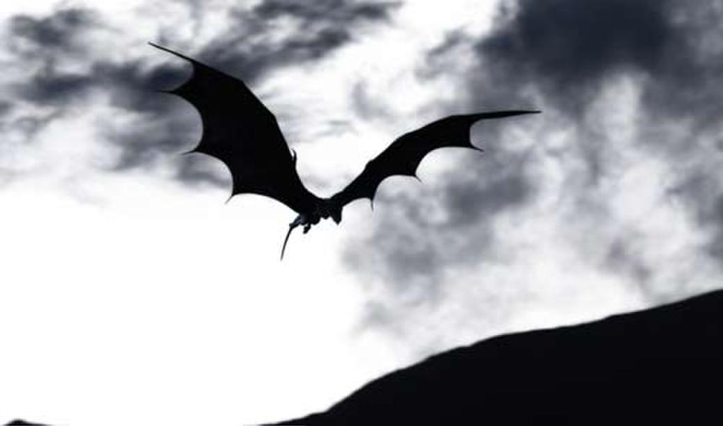 Dragons: Real Myths and Unreal Creatures Photos + Posters
