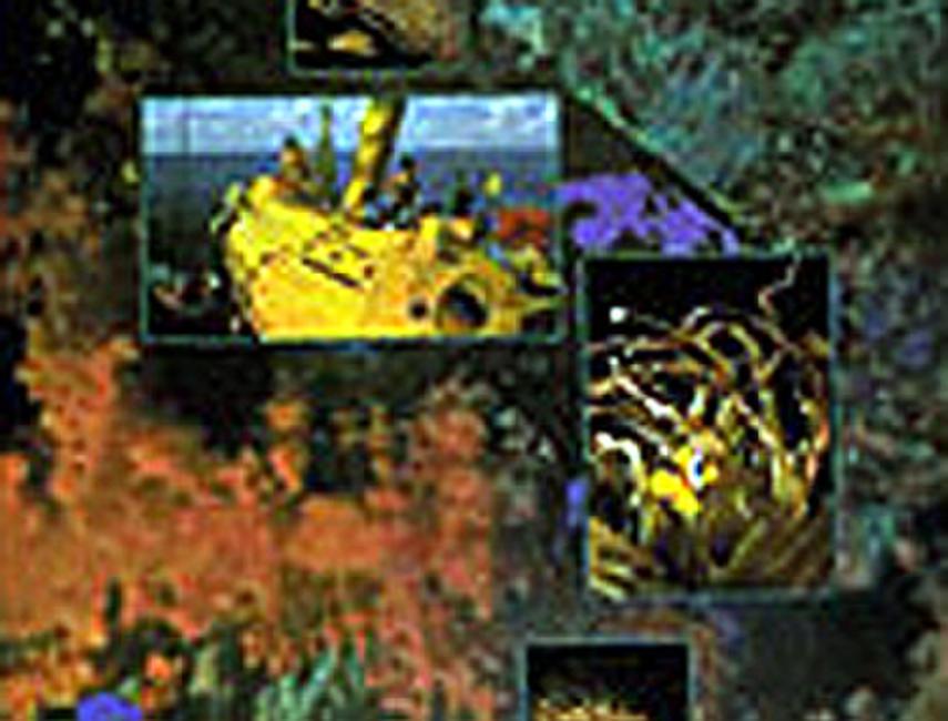 The Deepest Garden Photos + Posters