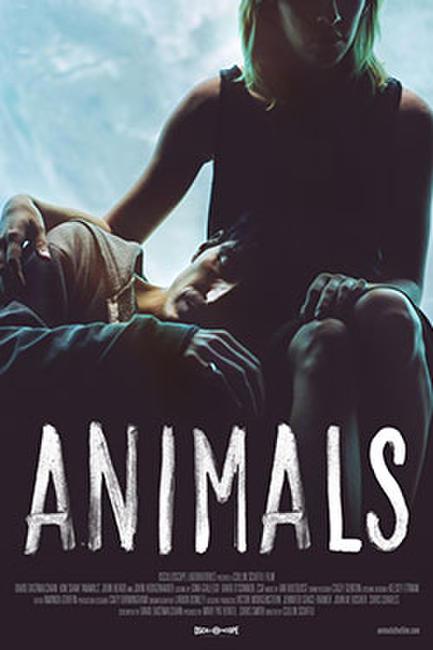 Animals Photos + Posters