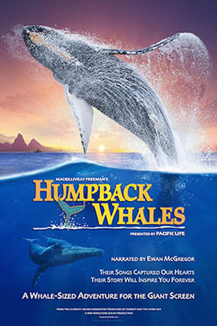 Humpback Whales Photos + Posters