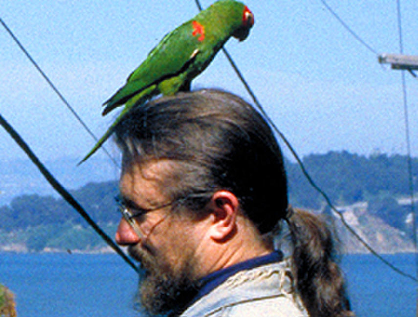 The Wild Parrots of Telegraph Hill Photos + Posters